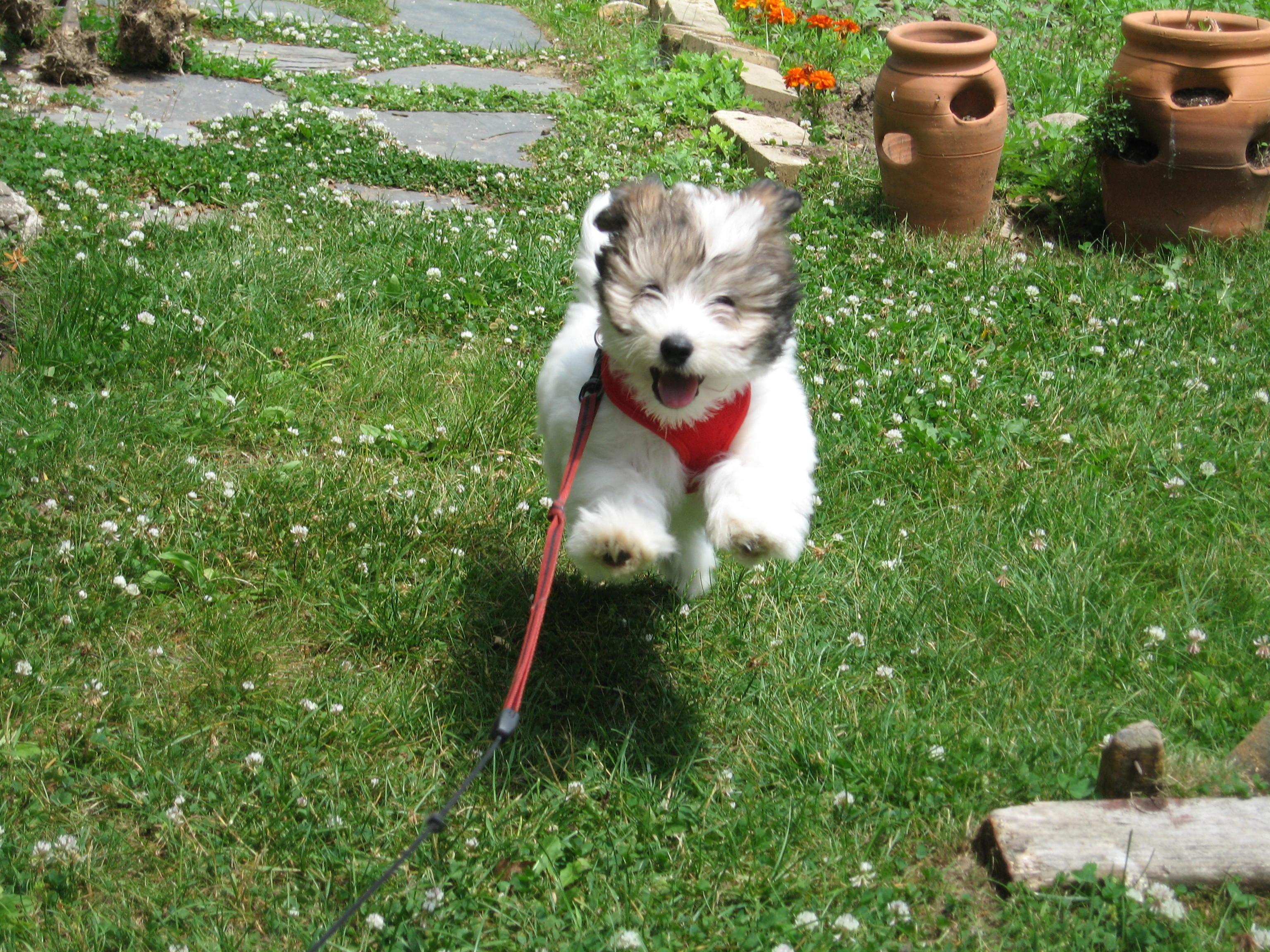 Pet Sitters, Dog Walking, Long Island, New York