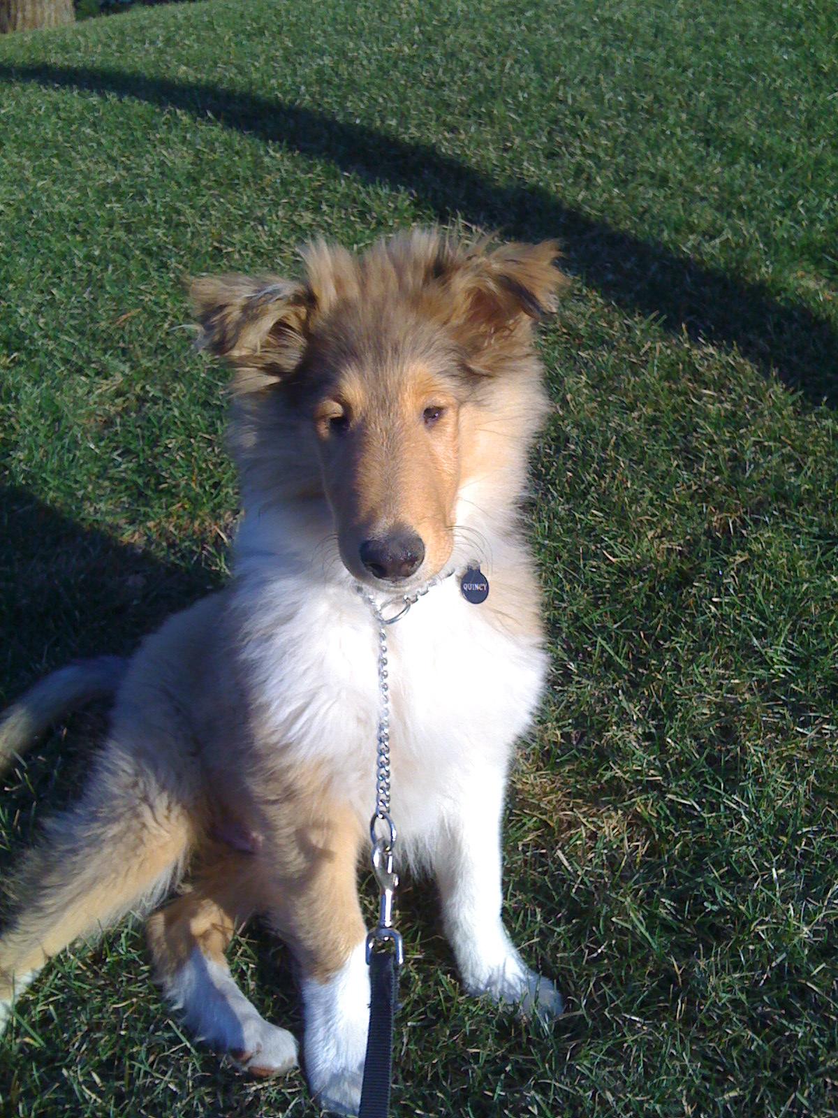 Pet Sitting, Dog Walking, Long Island, new York
