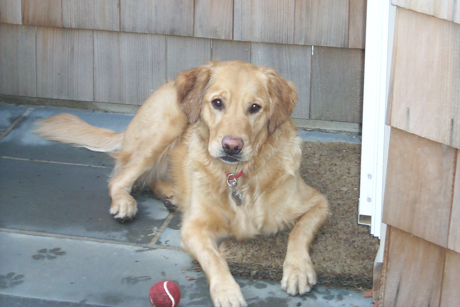 Pet Sitters, New York, Long Island, Dog Walking