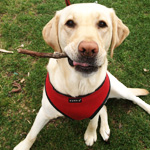 Dog Walker, Long Island, New York, Pet Sitters Club